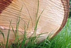Отрежьте журнал и траву Стоковое Фото