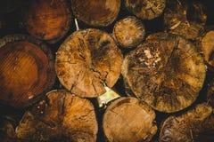 Отрежьте журналы в лес ели в дождливом дне Альпах Италии Стоковые Фото