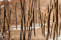 Отрежьте зазубрины на дереве Стоковая Фотография