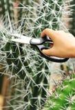 Отрежьте кактусы стоковое фото
