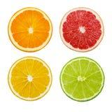 Отрежьте куски известки и лимона, апельсина, розового грейпфрута изолированного на белой предпосылке Стоковая Фотография