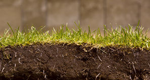 отрежьте лужайку зеленого цвета травы Стоковое фото RF