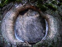 Отрежьте на расшиве старого дерева как шрам Стоковая Фотография