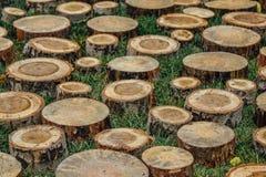 Отрежьте пни дерева для пути для сада на зеленой траве Стоковые Изображения