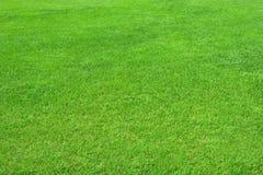 отрежьте пустой зеленый цвет травы поля чисто Стоковое фото RF