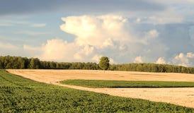 отрежьте пшеницу вала поля одиночную Стоковые Фотографии RF