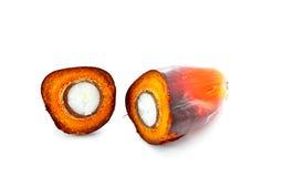 Отрежьте плодоовощ масличной пальмы  Стоковое Изображение RF