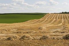 отрежьте свеже wheatfield Стоковые Изображения RF