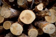 Отрежьте сосну logging Ежегодные кольца на сосне отрезка Журналы увидели лесопилка стоковое фото rf