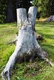 Отрежьте ствол дерева в Cadore в горах Dolomity, Италии Стоковое Фото