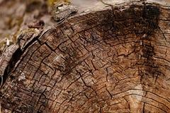 отрежьте ствол дерева Стоковые Фото