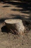 Отрежьте ствол дерева в лесе Стоковая Фотография