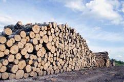 Отрежьте стог журналов дерева на поле Стоковое Изображение