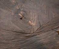 Отрежьте текстуру дерева влажную Стоковая Фотография