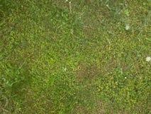 отрежьте траву Стоковые Изображения