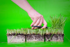 отрежьте траву Стоковое Фото