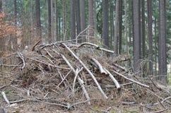 Отрежьте уравновешенные ветви дерева, южную Богемию стоковые фото