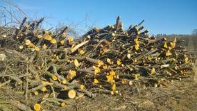 Отрежьте уравновешенные ветви, южную Богемию фруктового дерев дерева стоковая фотография