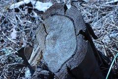 Отрежьте хобот в лесе Стоковое Изображение