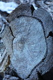 Отрежьте хобот в лесе Стоковые Фото
