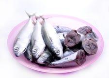отрезанные рыбы изолированные на белой предпосылке Стоковая Фотография RF