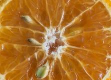 Отрезанный плодоовощ мандарина Стоковые Фото