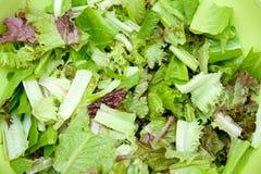 отрезанный салат Стоковые Изображения