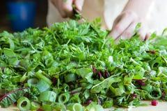 Отрезанный свежий салат Стоковое Фото