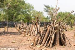 Отрезка деревья вниз - влияния лесов разрушения, глобальное потепление, Стоковое Изображение RF