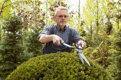 Отрезки садовника большой кустарник режет стоковая фотография