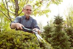 Отрезки садовника большой кустарник режет стоковое фото