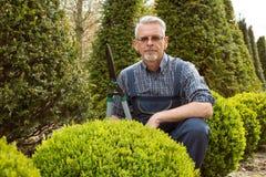 Отрезки садовника декоративный кустарник режет стоковое фото rf