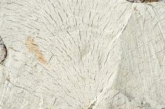 Отрезок дерева березы как предпосылка и текстура Стоковое фото RF
