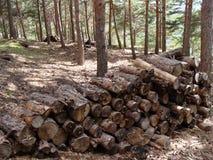 Отрезок деревьев Стоковое Изображение