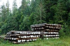 Отрезок журнала дерева, сельская местность леса Материал природы стоковые фотографии rf
