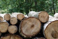 Отрезок леса, отрезанная сосна, журналы дерева березы аранжировал в заказе в кубическом Стоковое фото RF
