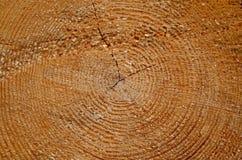 Отрезок ствола дерева Стоковые Фотографии RF