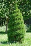 отрезок bush стоковая фотография rf