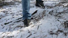 Отслеживать вид сзади камеры низкий широкоформатный мужского путешественника с рюкзаком идя вдоль пути в coniferous лесе сток-видео