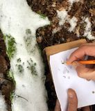 отслеживать животных в снеге стоковое фото rf