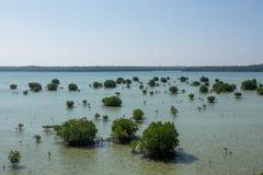 Отслеживать мангрову Karimun Jawa Стоковое фото RF