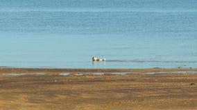Отслеживать съемку собаки коричневого цвета и белых морем акции видеоматериалы