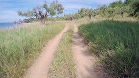 Отснятый видеоматериал антенны оливковой рощи сток-видео