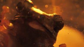 Отснятый видеоматериал жабы близкий сток-видео