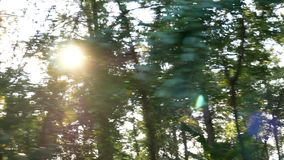 Отснятый видеоматериал от управлять автомобилем вниз с сельской дороги выровнянной с лесом деревьев солнце светит через древесину видеоматериал
