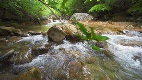 Отснятый видеоматериал потока пропуская через утесы в лесе видеоматериал