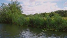 Отснятый видеоматериал шлюпки деревьев и тростников на речном береге дуя на ветреный день видеоматериал