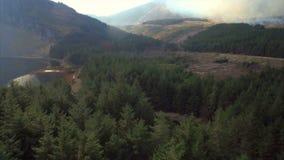 Отснятый видеоматериал трутня вечнозеленых лесов на горе сток-видео