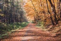 Отстаньте в лесе осени, предпосылке природы осени воодушевленности стоковые изображения