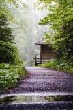 Отстаньте в туманном лесе с малыми укрытием и отражением в воде Стоковое Фото